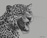 Jaguar Digital Art - Jaguar Portrait by Larry Linton