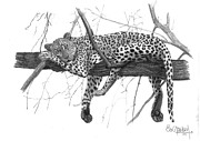 Animals Drawings Posters - JAGUARETE- Panthera onca Poster by Eduardo Crowder