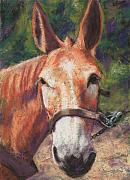 Donkey Pastels Prints - Jake Print by Billie Colson