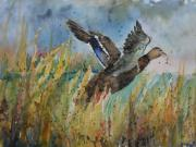 Waterscape Painting Metal Prints - Jamies Duck Metal Print by Sandra Strohschein