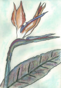 Character Pastels Prints - Jans Bird of Paradise Print by Shelby Kube
