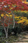 Photos Of Autumn Prints - Japan-60-18 Print by Craig Lovell