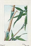 1870s art   japan  bamboo