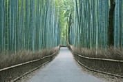 Photography Of Trees Framed Prints - Japan Kyoto Arashiyama Sagano Bamboo Framed Print by Rob Tilley