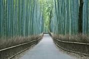 Japan Kyoto Arashiyama Sagano Bamboo Print by Rob Tilley