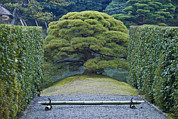Gravel Road Framed Prints - Japan Kyoto Katsura Imperial Villa Framed Print by Rob Tilley