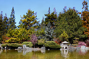 Japanese Tea Garden Prints - Japanese Friendship Garden . San Jose California . 7D12781 Print by Wingsdomain Art and Photography