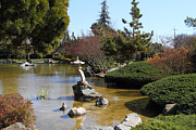 Koi Ponds Photos - Japanese Friendship Garden . San Jose California . 7D12793 by Wingsdomain Art and Photography