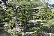 Landscaped Prints - Japanese Garden and Pond Print by Jeremy Woodhouse