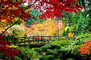 Fall Season Originals - Japanese Garden Bridge by Marius Sipa