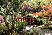 Garden Bridge Posters - Japanese Garden Bridge with Rhododendrons Poster by Carol Groenen
