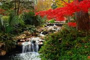 Fall Scene Posters - Japanese Garden Brook Poster by Jon Holiday