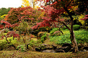 Japanese Fall Foliage Framed Prints - Japanese Garden in Autumn 9 Framed Print by Dean Harte