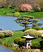 Bonsai Tree Posters - Japanese Garden Poster by Nancy Mueller