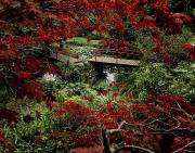 Autumn In The Country Metal Prints - Japanese Garden, Through Acer In Metal Print by The Irish Image Collection 