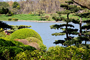 Chicago Botanic Garden Framed Prints - Japanese Garden View Framed Print by Nancy Mueller