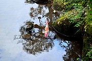 Fish Pond Prints - Japanese Koi Pond Print by Dean Harte