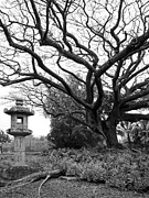 Japanese Lantern Prints - JAPANESE LANTERN and TREE - LILIUOKALANI PARK - HILO HAWAII Print by Daniel Hagerman