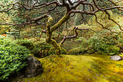 Photogaph Art - Japanese Maple  by Josh Whalen