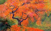 Japanese Maple Tree Print by Judith Barath