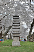 Tidal Framed Prints - Japanese Pagoda at the Cherry Blossoms Washington DC Framed Print by Metro DC Photography