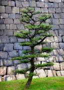 Trees Acrylic Prints - Japanese Tree by Roberto Alamino