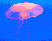 Sting Digital Art - Jazzy Jelly by Al Powell Photography USA