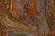 Colorful Bark Photos - Jazzy Twist by Anca Jugarean
