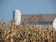 Cornfield Photos - JB Barn by Tina M Wenger