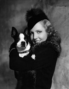 Fur Hat Posters - Jean Arthur With Boston Terrier, 1935 Poster by Everett