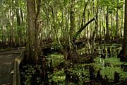 Gary  Taylor - Jean La Fitte  Swamp...