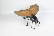 Insect Sculpture Metal Prints - Jeanetic Violet-Eyed Fly Metal Print by Michael Jude Russo