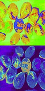 Glass Beads Prints - Jelly Bean Jewels 3 Print by Randall Weidner