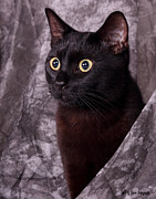 Black Cat Photos Photos - Jelly Bean by Sarah  Lalonde