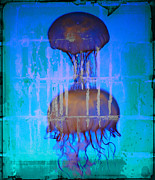 Artist Greeting Cards Prints Art - Jelly Stone Sandwich by Jerry Cordeiro