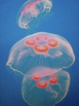 Sea Life Posters - Jellyfish On Blue Poster by Sally Crossthwaite