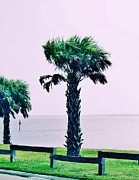 Sabal Palm Trees Prints - Jensen Causeway with Cross Processing Print by Don Youngclaus