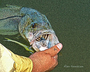 Tarpon Drawings Posters - Jerkbait Snook Poster by Alex Suescun