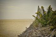 Sand Fences Prints - Jersey Shore Print by Heather Applegate