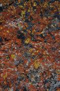 Oregon Abstract Art Prints - Jewel Lichen Print by Greg Vaughn - Printscapes