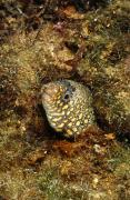Wild One Photos - Jewel Moray Eel Hiding In Hole, Muraena by James Forte
