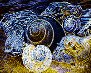 Poster From Digital Art Metal Prints - Jewels From The Ocean  Metal Print by Carol F Austin