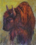Bison Pastels - Jim Brown by Susan Williamson