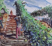 Grape Pickers Prints - Jims harvest Print by W R  Hersom