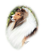 Sable Sheltie Posters - JKC JCC CH Seaside Fairy JP Indy Rider-2 Poster by Chris Lynch