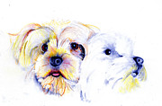 Terriers Drawings Prints - Joanies Girls Print by Ann Hamilton