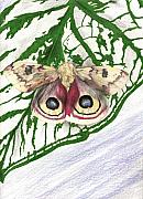 Moth Drawings - Joann by Courtney Trimble