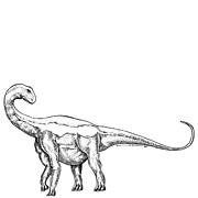 Cartoon Drawings - Jobaria - Dinosaur by Karl Addison