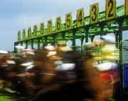 Racing Number Framed Prints - Jockeys Leaving Starting Gates Framed Print by The Irish Image Collection