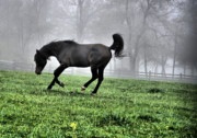 Country Scene Photos - Jog N Fog by Emily Stauring